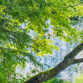 Environmental-Health-Resources