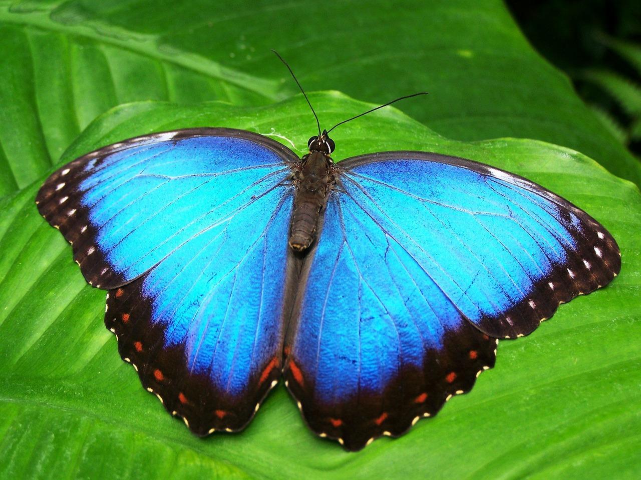 Environmental Health Trust Bees, Butterflies and Wildlife